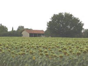 Unconverted barn in Deux Sevres, Poitou Charentes, France